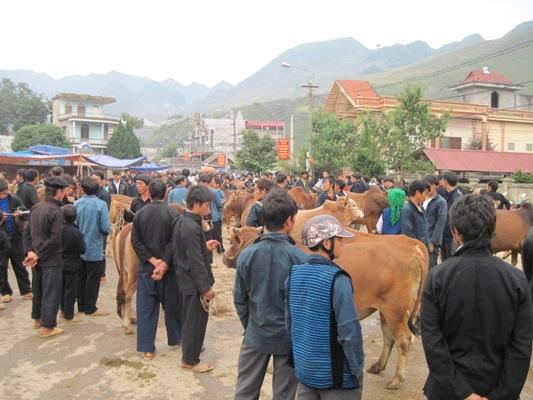การเลี้ยงวัวเชิงพาณิชย์ในเขตที่รายสูงหินห่ายาง