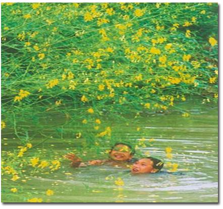 Bông điên điển món ngon vùng sông nước Hậu Giang