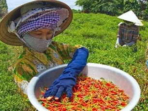 Vietnam, Israel boost agricultural cooperation