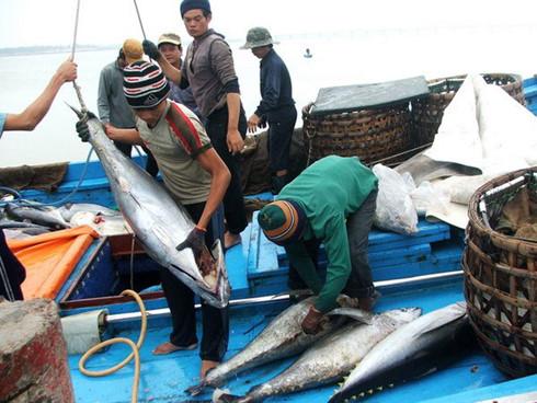 Ngư dân Bình Định bội thu chuyến biển đầu năm