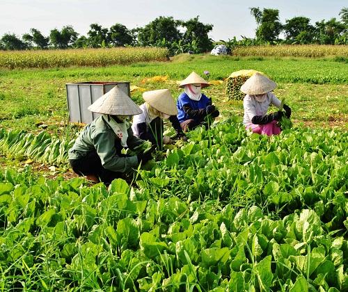 Устойчивая ликвидация бедности и осуществление Целей развития тысячелетия во Вьетнаме