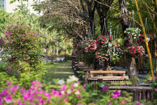 Предновогодние дни в цветочных садах в районе Донгтхап-Мыой