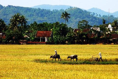 บรรยากาศการดำเนินชีวิตของหมู่บ้านเวียดนาม