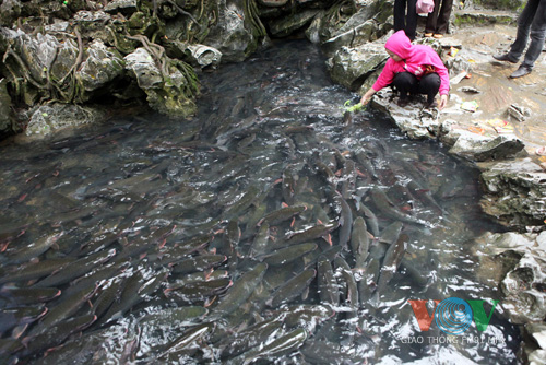 ธารปลาพิศวงในจังหวัดThanh Hoa