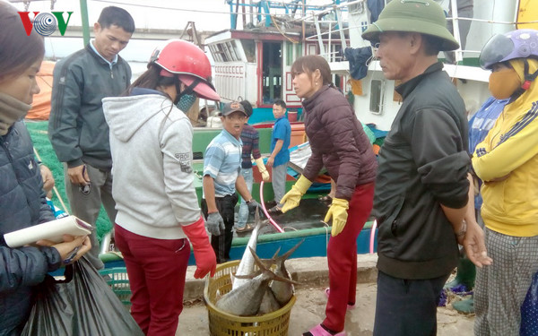 Binh Dinh fishermen net bumper catch