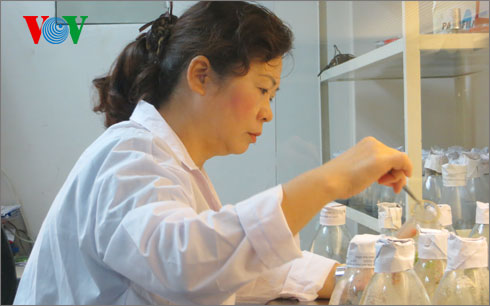 Doctor Ha Thi Thuy's passion for agricultural genetics