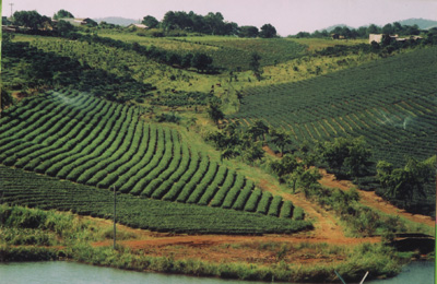 High-tech agricultural development in the central highlands