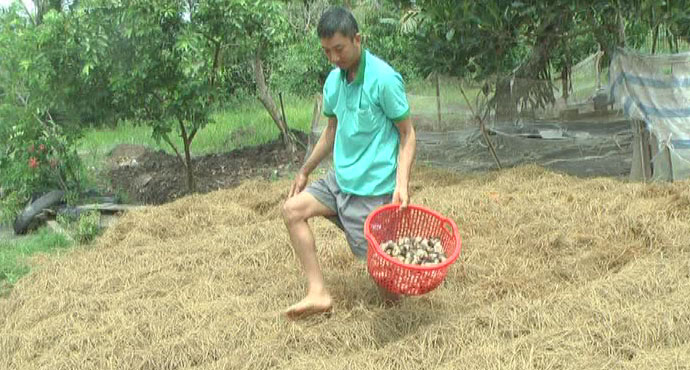 Mushroom growing, profitable trade for farmers in Soc Trang