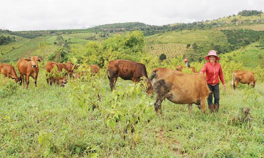 HCM city helps farmers escape poverty