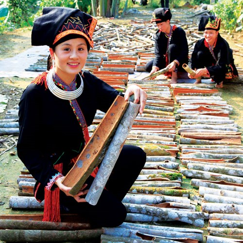 Cinnamon growing helps reduce poverty in Yen Bai province