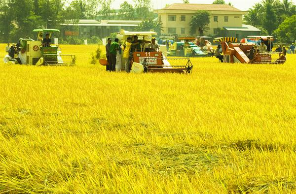 Policies on new rural development continue to be adjusted