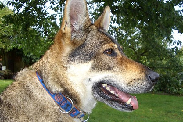 法国科学家:狗能发现乳腺癌