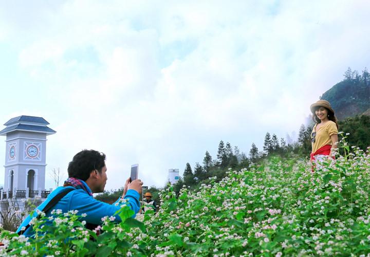 Гречиха цветёт на горе Фансипан