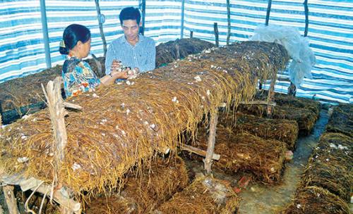Крестьяне провинции Донгтхап обогащаются за счёт шампиньонов