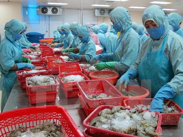 Рыбное хозяйство Вьетнама стремится к увеличению экспорта креветок