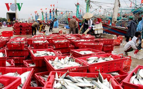 Binh Dinh : Une pêche abondante