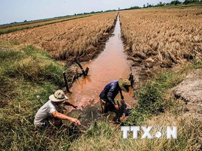 Le delta du Mékong accélère la restructuration de son agriculture