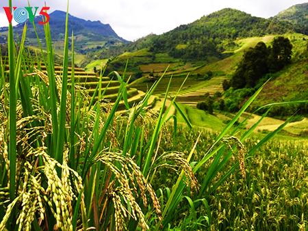 La splendeur des rizières en terrasse de Mù Cang Chai