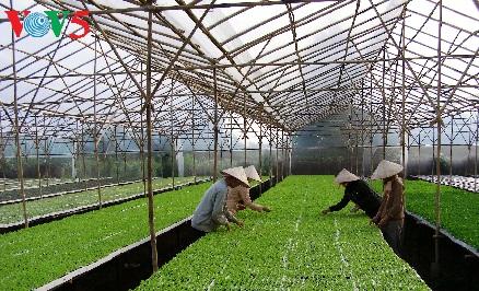 Ha Nam développe l'agriculture high tech