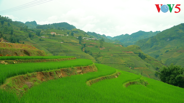 La fête du riz nouveau des Gie Trieng