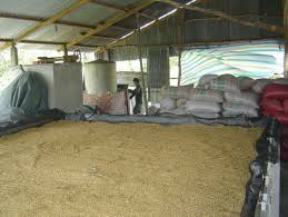 Đồng bằng sông Cửu Long giảm tổn thất trong khâu sấy lúa