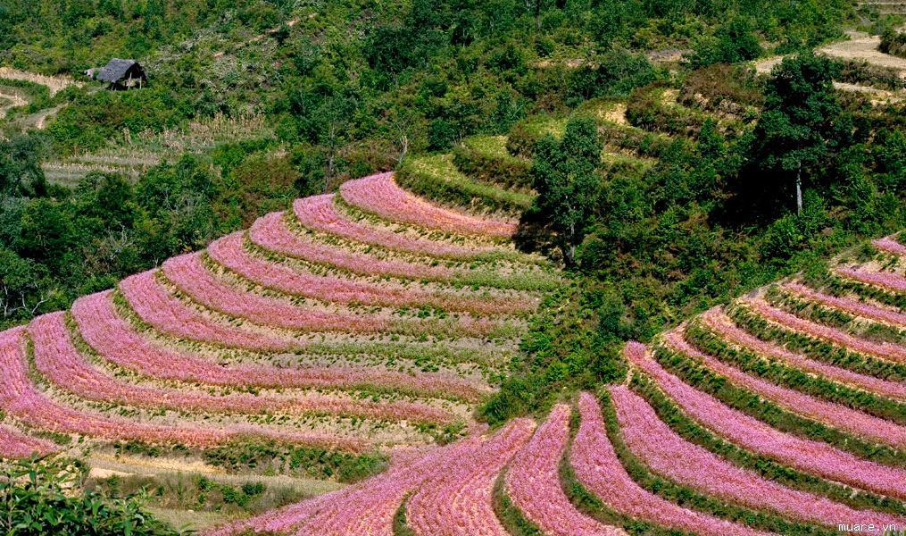 Destinations touristiques prisées des Vietnamiens en automne