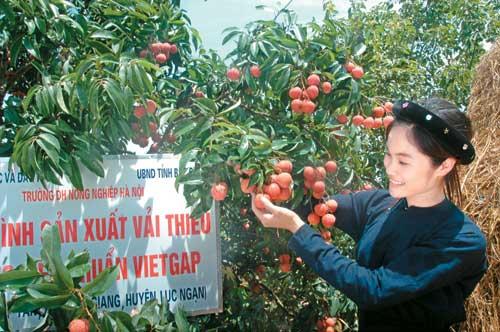Moderniser la filière fruits et légumes pour mieux exporter
