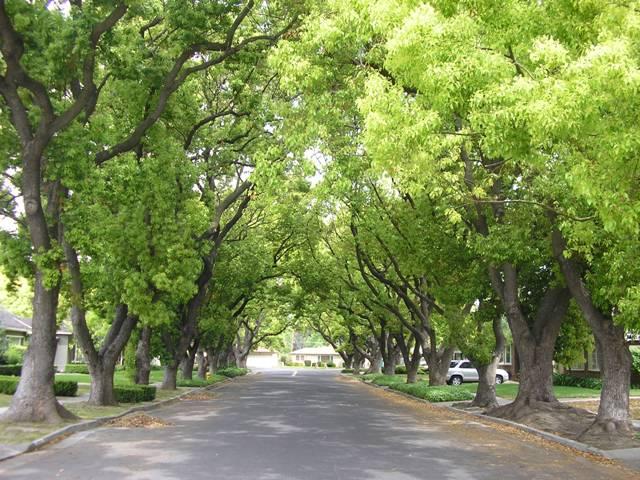 越南移动通讯公司赞助河内一千棵树