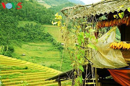Reisterrassen in Mu Cang Chai - Die prächtige Schönheit im Hochland im Nordwesten