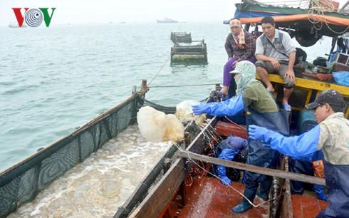 Quallenfang im Umfeld der Co To-Insel in Quang Ninh