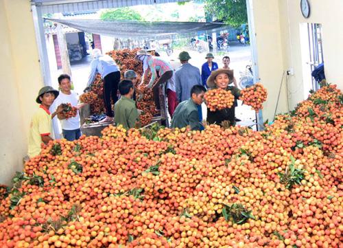 การลงทุนเชิงลึกช่วยเพิ่มมูลค่าการส่งออกผักและผลไม้