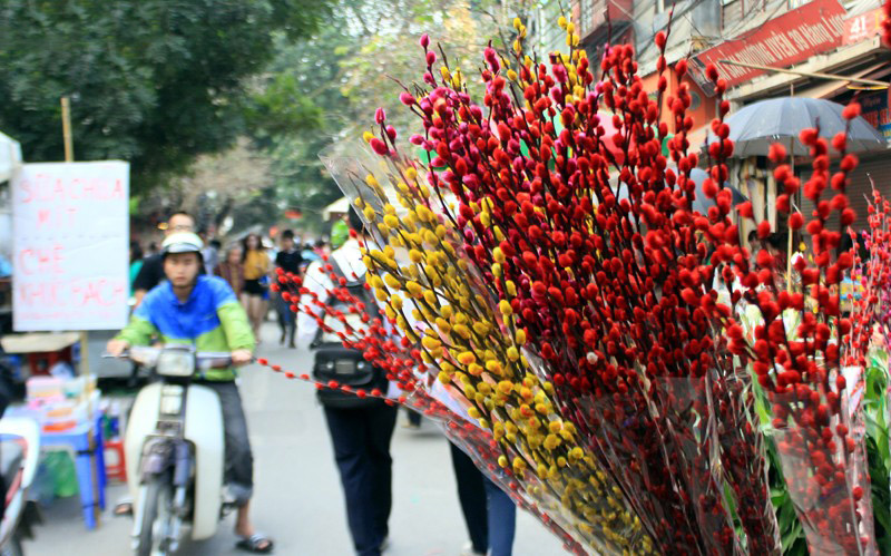 ดอกไม้แห่งความโชคดีคนเวียดนามใช้ตกแต่งในบ้านช่วงตรุษเต๊ตตามประเพณี (บทที่ 1)