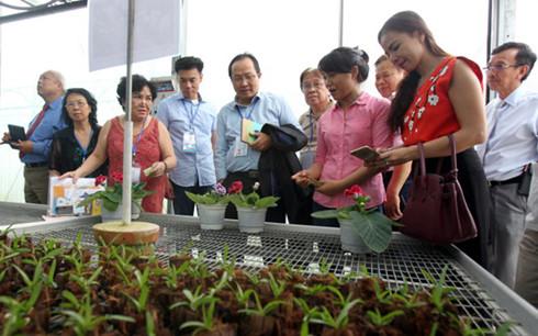 มีสถานประกอบการเวียดนามที่อาศัยในต่างประเทศ 900 แห่งลงทุนในนครโฮจิมินห์