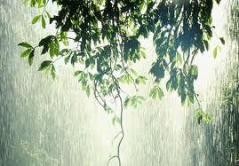 Cơn Mưa Mùa Đông-Winter Rain