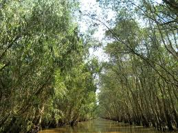 Tra Su melaleuca forest in high-water season, a must see in An Giang
