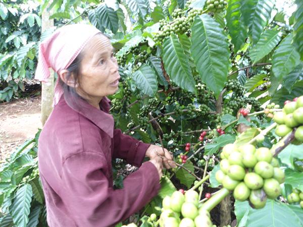 Elderly contribute to new rural development