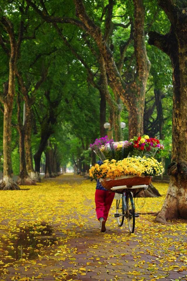 Hanoi's beauty in the season of falling leaves