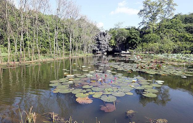 Yen stream in water lilies blooming season