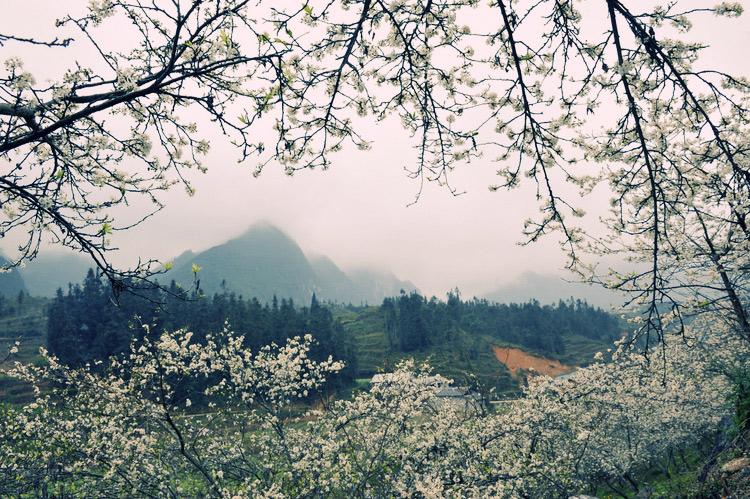 Moc Chau- a plateau of flowers