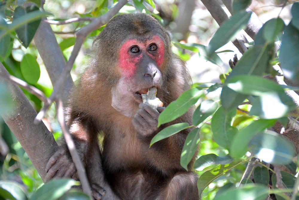Ba Mun island - a paradise for wild animals