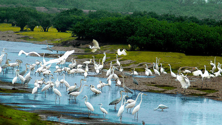 Xuan Thuy National Park, a bird paradise