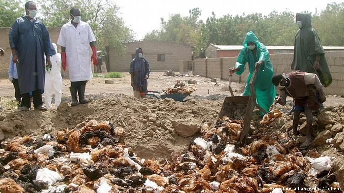 Countries to fight avian influenza