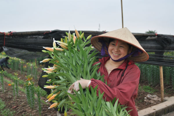 Tay Tuu flower village in Spring