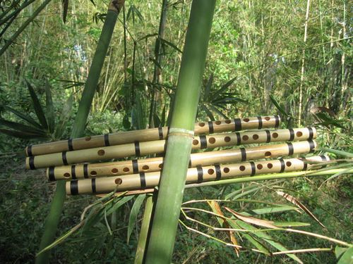 The Vietnamese Bamboo Flute