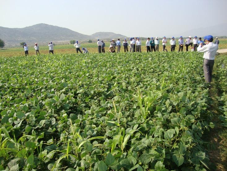 Provincia vietnamita cambia estructura de cultivo para adaptarse al cambio climático