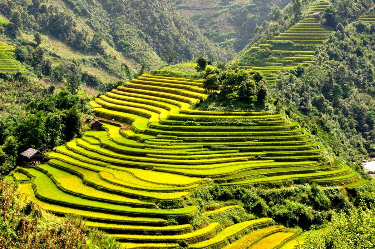 Meningkatkan masa tanam di sawah terasering di kabupaten Mu Cang Chai