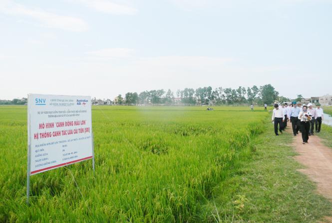 Propinsi Quang Binh membangun pola persawahan besar sehingga berhasil guna dalam produksi pertanian