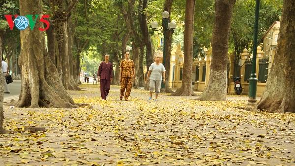Xao xuyến thảm lá vàng trên phố Phan Đình Phùng