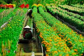 Blumendörfer in Dong Thap Muoi vor dem Tetfest