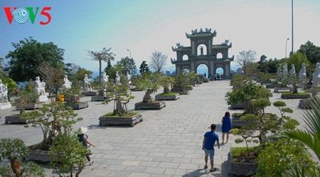 岘港市的蓝宝石——山茶